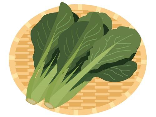 小松菜の保存は冷蔵庫